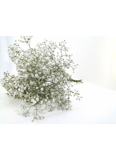 Kuru Çiçek Deposu Kuru Çiçek 1.Kalite Şoklanmış Dökülmeyen Natural Cipso Demeti Beyaz